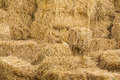 Dry straw for livestock piles of rice in farm live stock Royalty Free Stock Photos