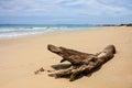 A Dry Tree At Bai Dai Beach (a...