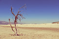 Dry tree beach sand and patara turkey Royalty Free Stock Photography