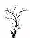Dry tree branch and cut paste on a white background Stock Photos