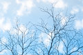 Dry tree branch silhouette over blue sky Royalty Free Stock Photo