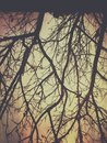 dry tree branches in late autumn at the time of sunset, the autumn, autumn background picture Royalty Free Stock Photo