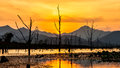 Dry tree with lake and mountain in sunset Royalty Free Stock Photo