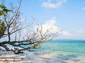 Dry Tree At Sea Beach