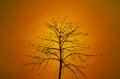 Dry tree silhouette on orange background Stock Photography