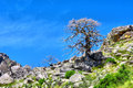 Dry tree on a slope shot in krakadouw cederberg mountains near clanwilliam western cape south africa Stock Images