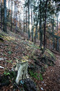 Dry Tree Stump In Autumn Decid...