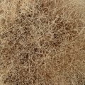 Dry Tumbleweed bush close-up Royalty Free Stock Photo