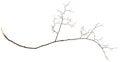 Dry twig Royalty Free Stock Photo