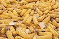 Dry yellow corn for food in the winter Royalty Free Stock Images