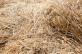 Dry yellow natural hay background