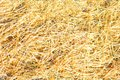 Dry yellow straw grass background texture Royalty Free Stock Photo