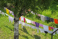 Drying clothes on the garden Royalty Free Stock Photo