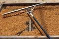 Drying coffee beans on the sun kauai usa Stock Images