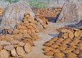 Drying of cow dung cake heaps in the sun in rural india Royalty Free Stock Photography