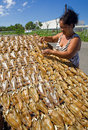 Drying fish Royalty Free Stock Photography