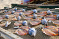Drying fish Royalty Free Stock Images