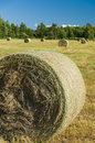 Drying haystacks on the field vertical view Royalty Free Stock Photo