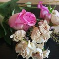 Drying Rose's in pink and small white Royalty Free Stock Photo