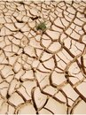 Dryness Stock Images