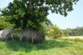 Drzewny dorośnięcie na kamieniu