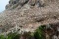 Détail d une réserve d oiseaux à sept îles Photographie stock libre de droits