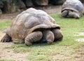 Duży je losu angeles mauritius parka rezerwy seychelles żółwia vanille Zdjęcia Royalty Free