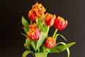 Dual color  tulip in vase Royalty Free Stock Photo