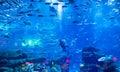 Dubai mall aquarium a scuba diver in the in the Stock Photos