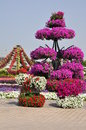 Dubai miracle garden in the uae it contains over million flowers Stock Photo