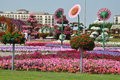 Dubai miracle garden in the uae it contains over million flowers Royalty Free Stock Photo