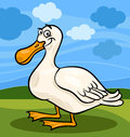 Duck bird farm animal cartoon illustration of funny comic Royalty Free Stock Images