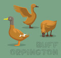 Duck Buff Orpington Cartoon Vector Illustration
