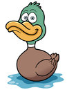 Duck cartoon vector illustration of Stock Image