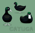 Duck Cayuga Cartoon Vector Illustration