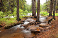 Duck creek along the guanella pass scenic byway in colorado Royalty Free Stock Photo