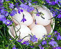 Duck eggs and flowers Royalty Free Stock Photo