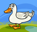 Duck farm bird animal cartoon illustration of funny comic Royalty Free Stock Photography