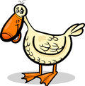 Duck farm bird cartoon illustration of funny character Stock Photography