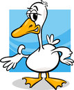 Duck or goose cartoon farm bird illustration of funny character Royalty Free Stock Images