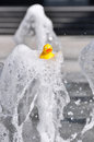 Duck on a jet fountain Stock Image
