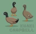 Duck Khaki Campbell Cartoon Vector Illustration