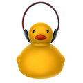 Duck listing music for adv or others purpose use Stock Photography