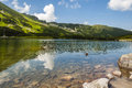 Duck on a pond in the mountains swims poland Stock Photography