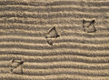 Duck Prints on the Sand Stock Image