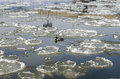 Duck in river between big frozen piece of ice lonely the the Stock Image