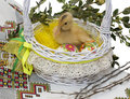 Duck sitting in easter basket yellow with painted eggs Stock Photography