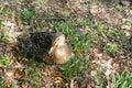 Duck sitting on ground Stock Photo