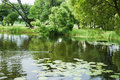 Duck swim on the lake Royalty Free Stock Photo