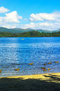Duck swimming in the Loch Lomond lake in Luss, Scotland Royalty Free Stock Photo
